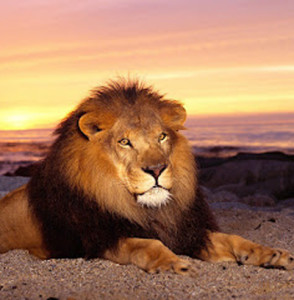 We naturally pay more attention to the lion than the sunrise. But what if the lion isn't really there?